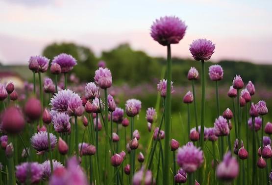 Viele freiverkäufliche Arzneimittel enthalten pflanzliche Bestandteile.