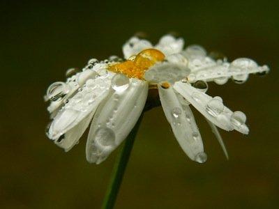 Viele freiverkäufliche Arzneimittel kommen direkt von Mutter Natur.